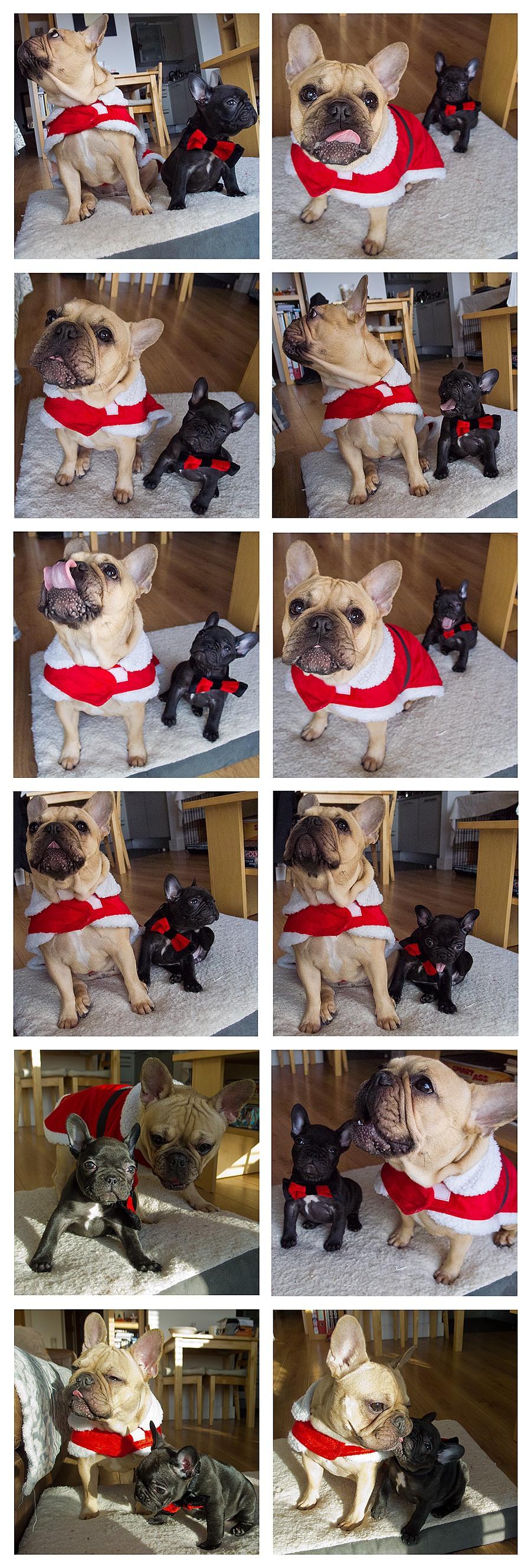 Christmas batfrogs